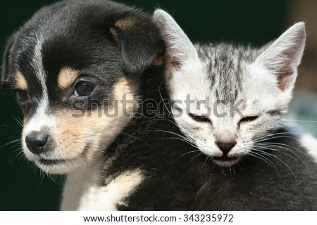 cute kitten and puppy - stock photo