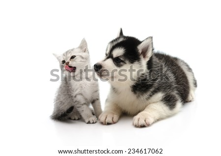 Cute Kitten and puppy looking on white background isolated - stock photo