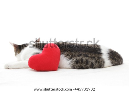 Cute kitten and red heart on white background   - stock photo