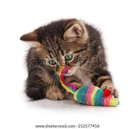 Cute kitten caught  toy mouse isolated on white background. Focus on the mouse - stock photo