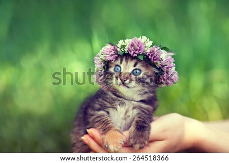 Cute kitten crowned with chaplet in female hands - stock photo