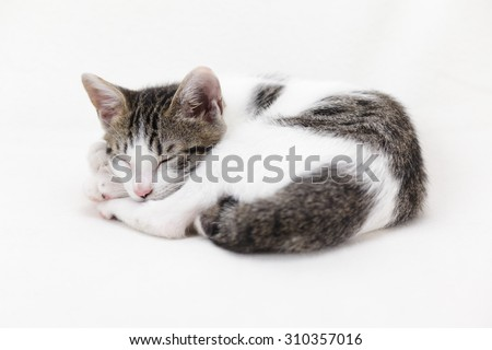 Cute kitten curled up asleep on white background