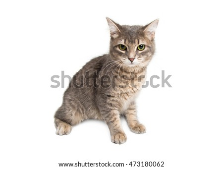 Cute kitten - Grey and brown fur. Isolated on white