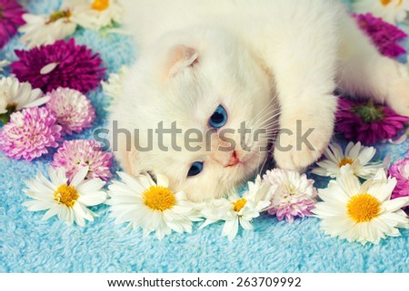Cute kitten have a rest on the flowers - stock photo