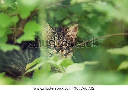 Cute kitten hunting in the dense jungle. Image with selective focus