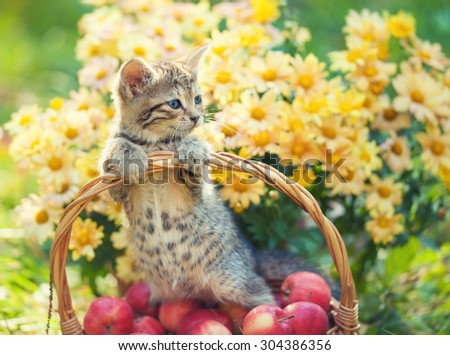 Cute kitten in the basket with apples in the garden - stock photo