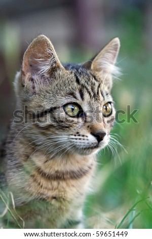 cute kitten in the grass - stock photo