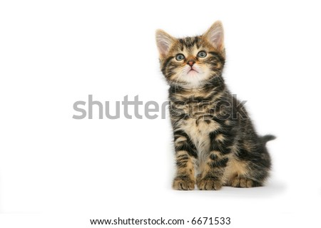 cute kitten isolated on white - stock photo