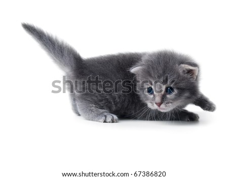 cute kitten isolated over white closeup shallow dof - stock photo