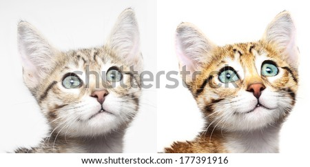Cute kitten looking up before and after computer retouching - stock photo