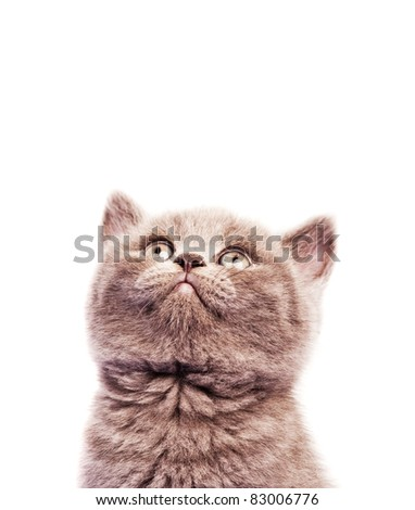 cute  kitten looking up, isolated against white background - stock photo