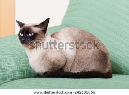 cute kitten lying on  green couch.  - stock photo