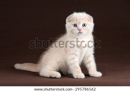 Cute kitten on a brown background