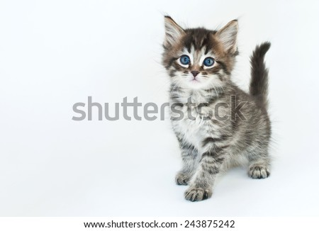 Cute kitten on a white background with copy space. - stock photo