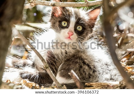 Cute kitten outdoors, black and white - stock photo