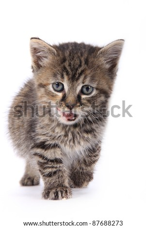 Cute kitten over white background - stock photo