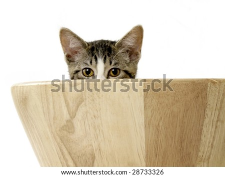 Cute kitten peeking out from wooden bowl - stock photo