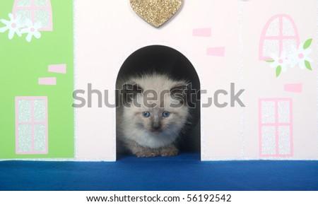 Cute kitten peeking out of decorative doorway on blue background - stock photo