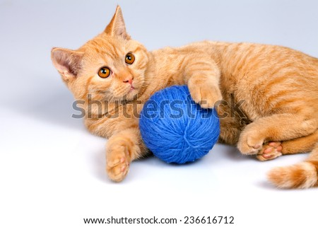 Cute kitten playing with clew of yarn - stock photo