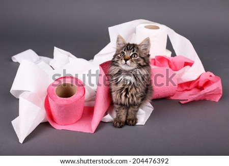 Cute kitten playing with roll of toilet paper,  on gray background - stock photo