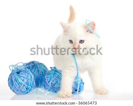 Cute kitten playing with yarn, on white background - stock photo
