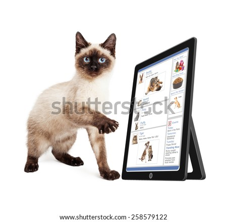 Cute kitten scrolling through a social media website on a tablet device - stock photo