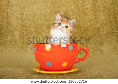 Cute kitten sitting inside large orange polka dot cup on olive green background  - stock photo