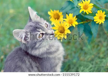 Cute kitten sitting near yellow flowers - stock photo