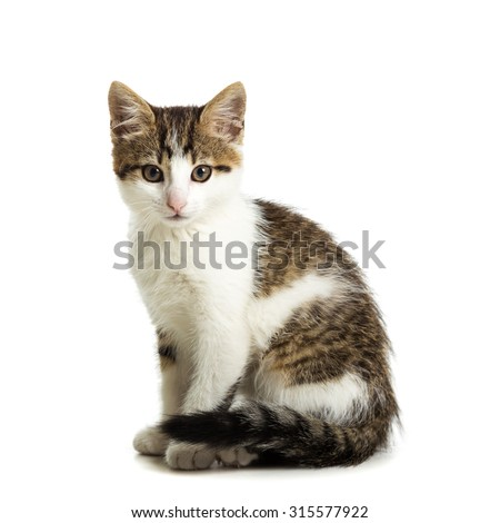 Cute kitten sitting on a white background - stock photo