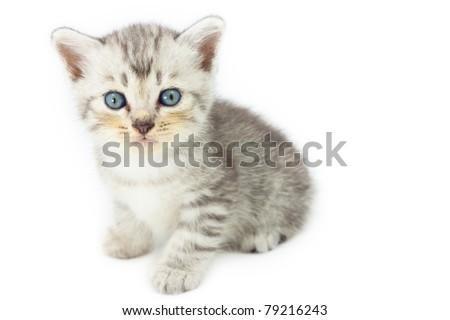 Cute kitten standing on white background - stock photo