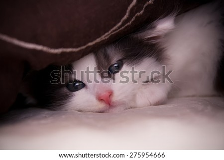 Cute kitten under the pillow - stock photo