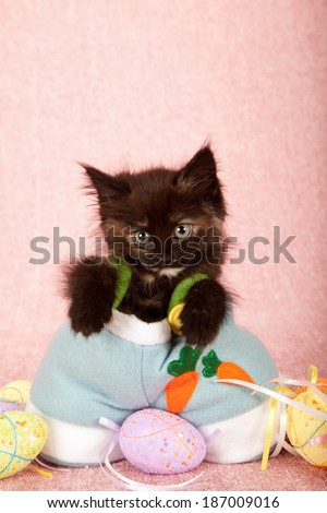 Cute kitten wearing blue Easter pants with Easter eggs on pink background - stock photo