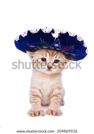 cute kitten wearing blue sombrero hat isolated on white background - stock photo