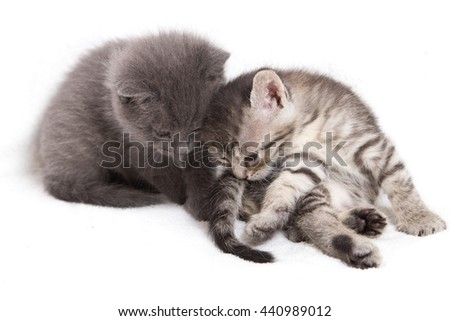 Cute kitten, white background