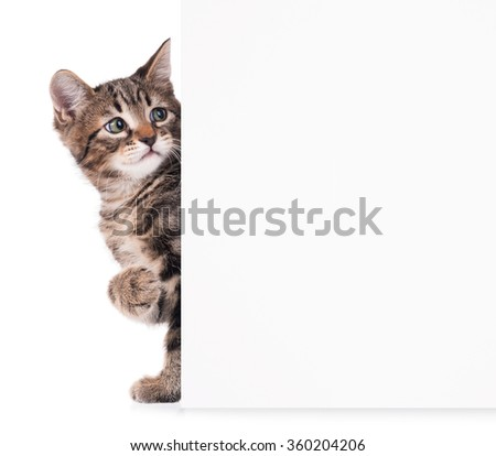 Cute kitten with a blank billboard for your text over white background - stock photo
