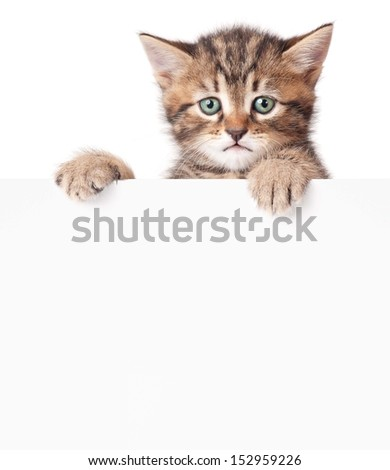 Cute kitten with a blank billboard over white background - stock photo