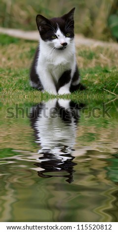 Cute kitten with a reflection in the water. - stock photo