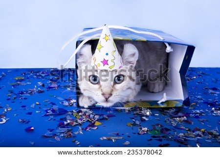 Cute kitten with blue eyes wearing birthday hat inside of Birthday gift bag on blue background with confetti