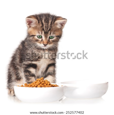 Cute kitten with bowl for a forage over white background - stock photo