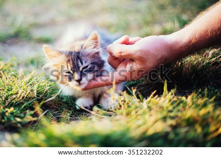cute kitten with closed eyes and human hand - stock photo