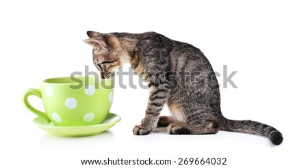 Cute kitten with cup isolated on white - stock photo