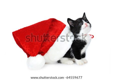 cute kitten with red Santa Claus  hat - stock photo