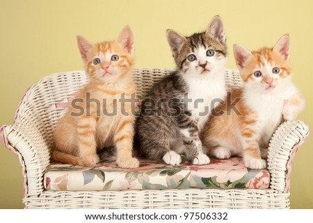 Cute kittens sitting on miniature white wicker bench - stock photo