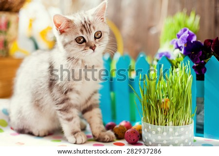 cute kitty and Easter decoration - stock photo