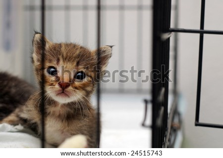 Cute Kitty In Cage - stock photo