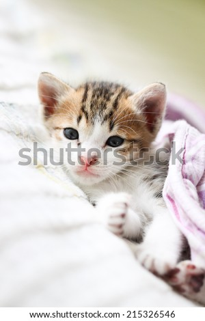 Cute Kitty is laying on the bed - stock photo