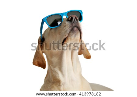 Cute Labrador dog with sunglasses isolated on white - stock photo