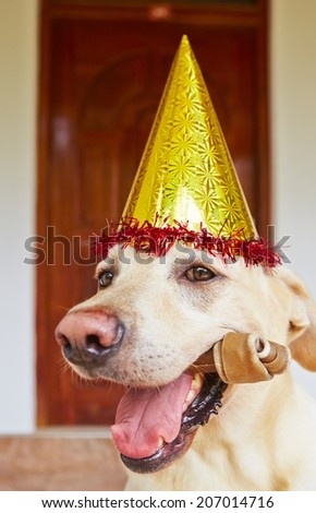 Cute labrador retriever is wearing party hat - stock photo