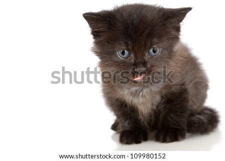 Cute little black kitten with blue eyes and his tongue sticking out - stock photo