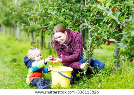 Cute little blond toddler boy  his young mother picking red apples in fruit orchard. Family having fun with gardening and harvesting. Lifestyle, organic food, family concept. - stock photo